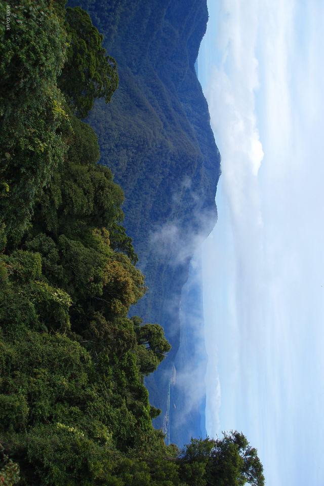 URL httpwwwiskincoukwallpaperlandscapesdorrigo rainforest 640x960