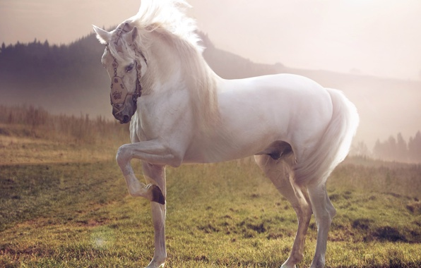Wallpaper horse horse white stallion wallpapers animals   download 596x380