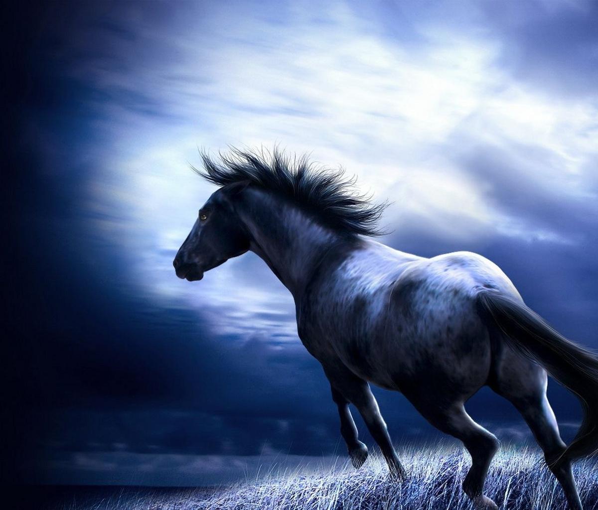 50 Free Horse Wallpapers And Screensavers On Wallpapersafari