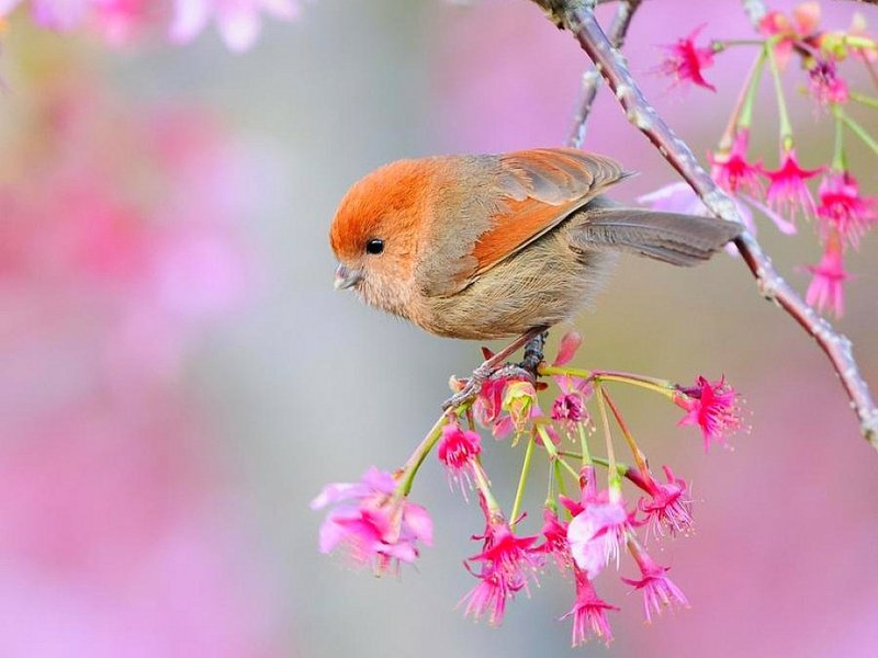 Beautiful Bird Beautiful Bird Animals Birds HD Desktop Wallpaper 800x600