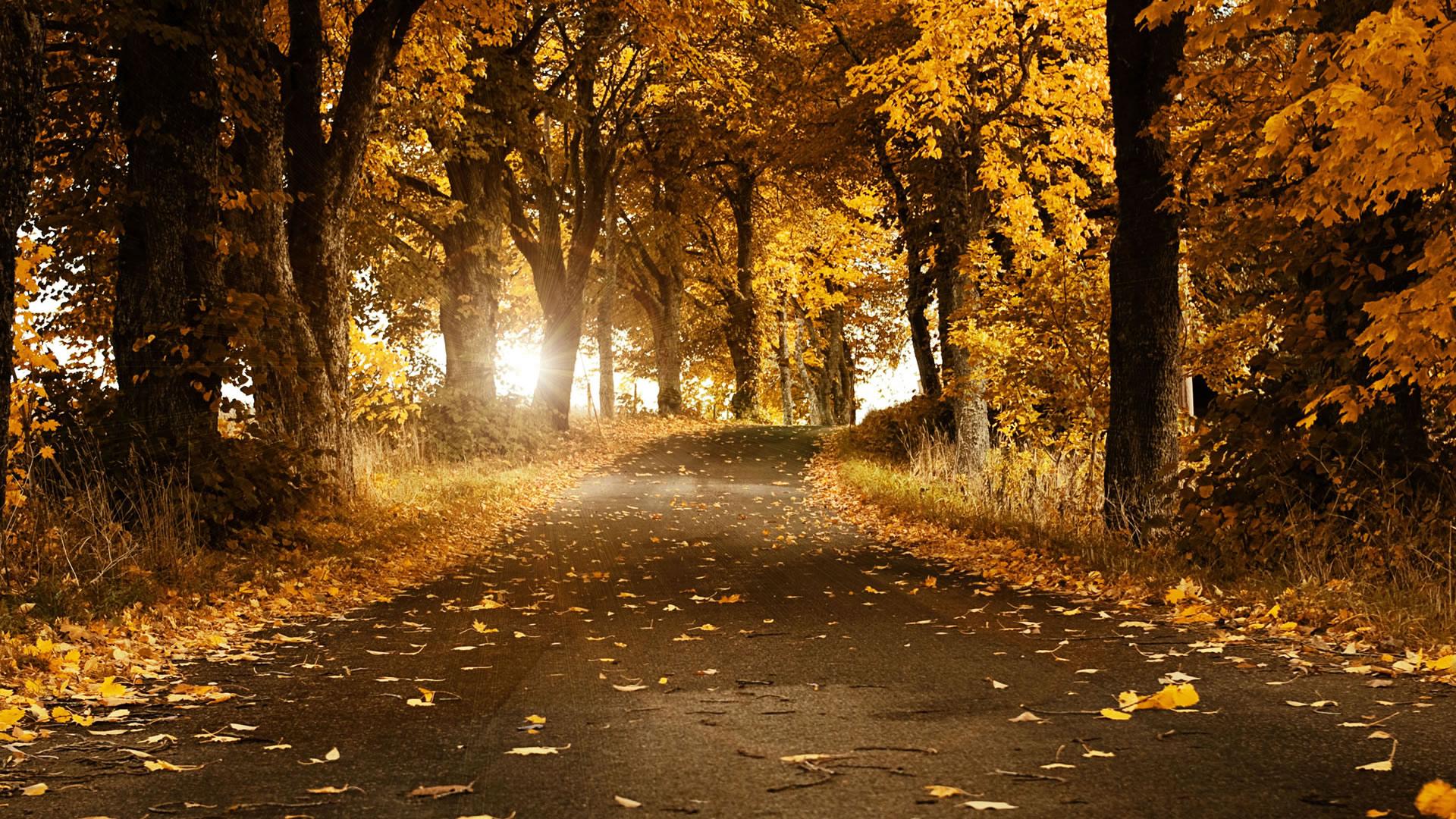 Nature Background Pics - wallpaper hd