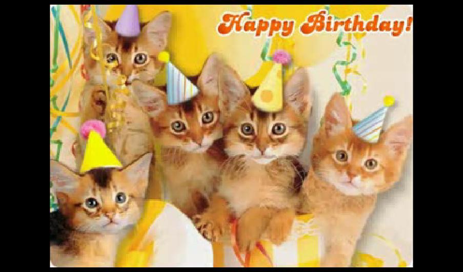 Funny Birthday Cat 27 Desktop Wallpaper 903x531