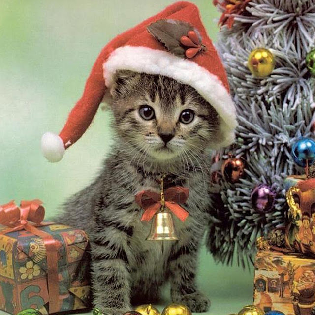 iPad Wallpapers Download Christmas Pets iPad Wallpapers 640x640