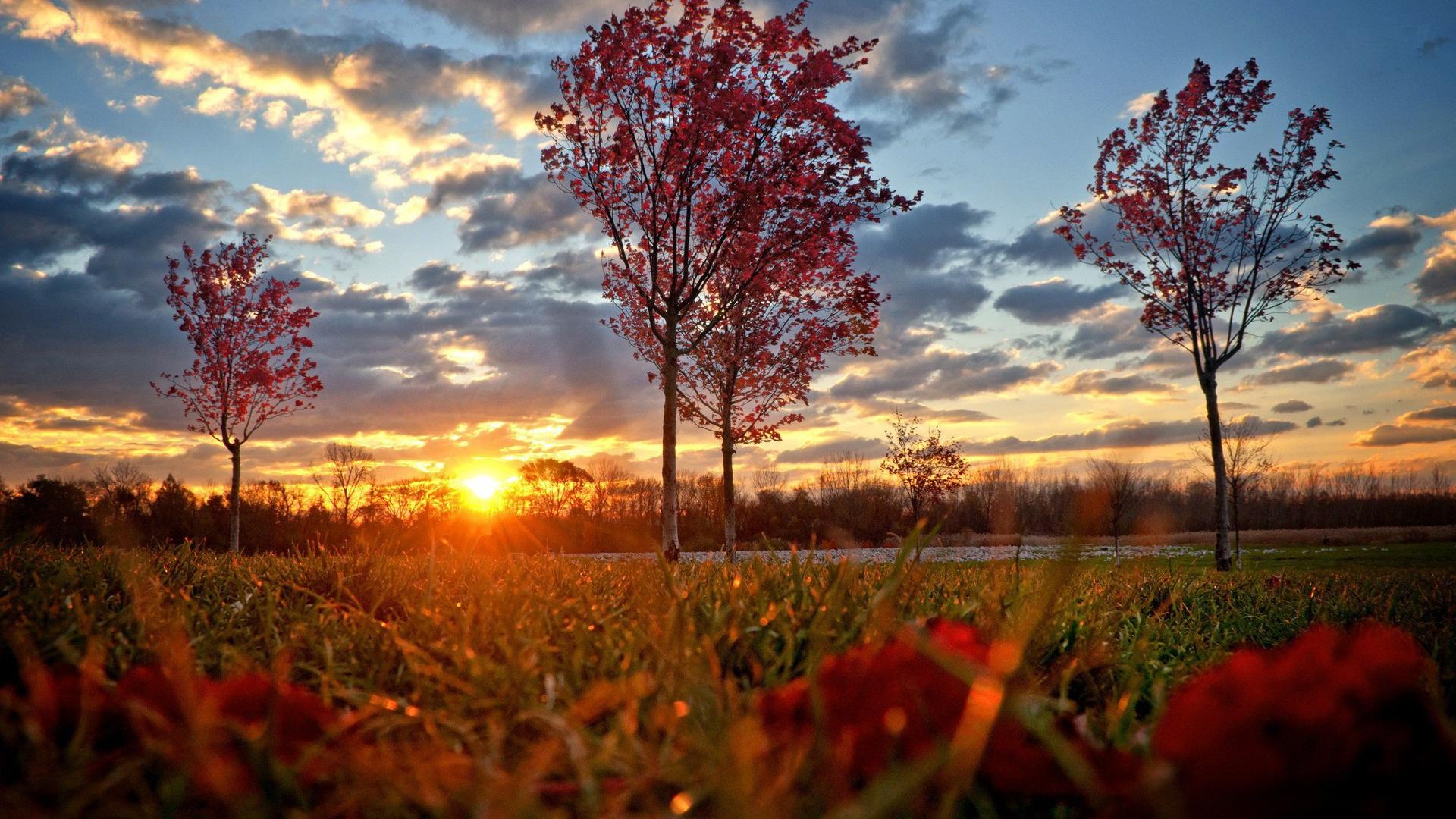 autumn trees wallpaper hd 1920x1080
