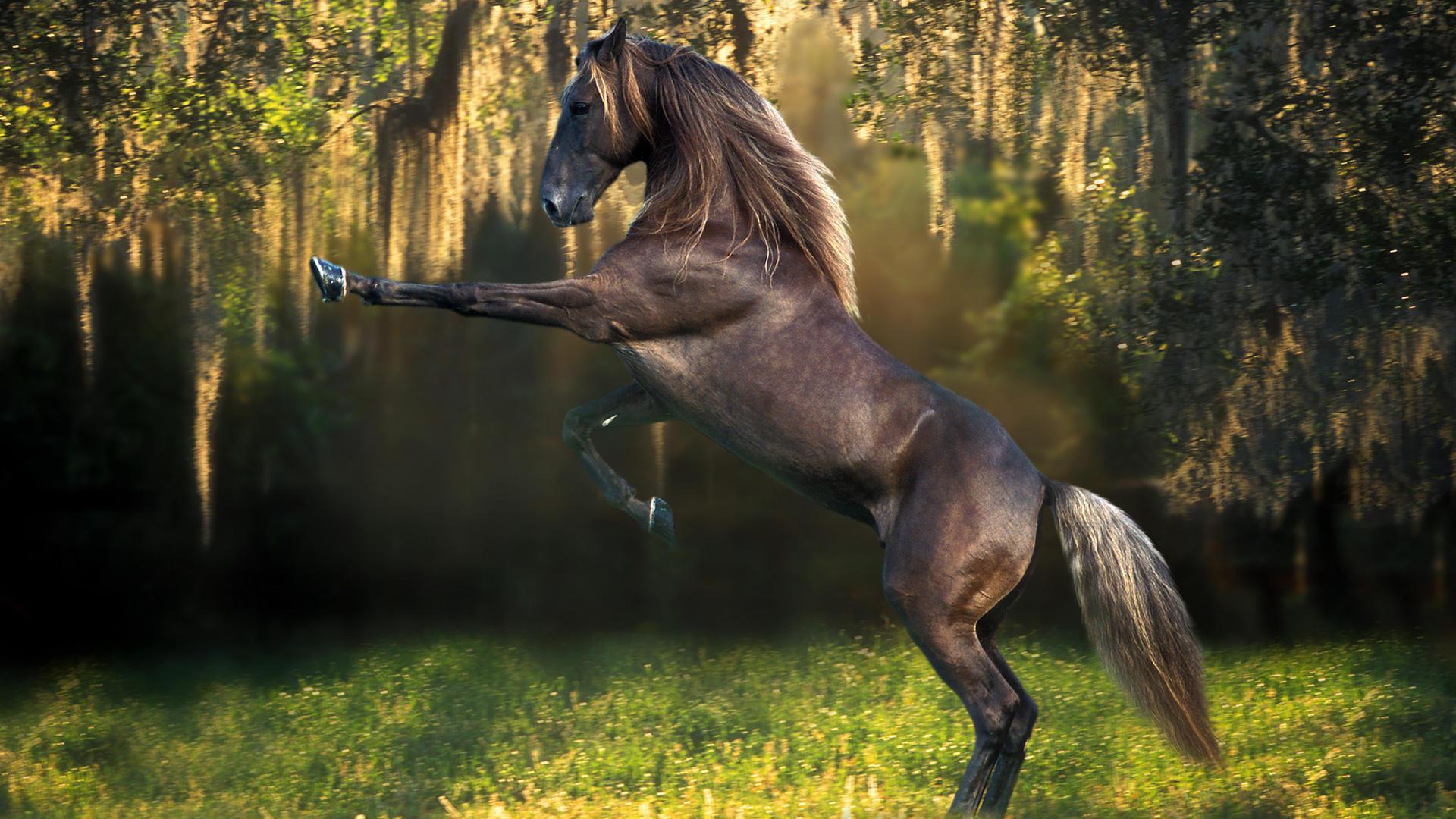 horse desktop wallpaper Desktop Backgrounds for HD Wallpaper 1920x1080