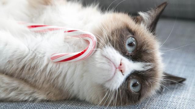 Grumpy Cat Christmas Wallpaper animalgals 640x360