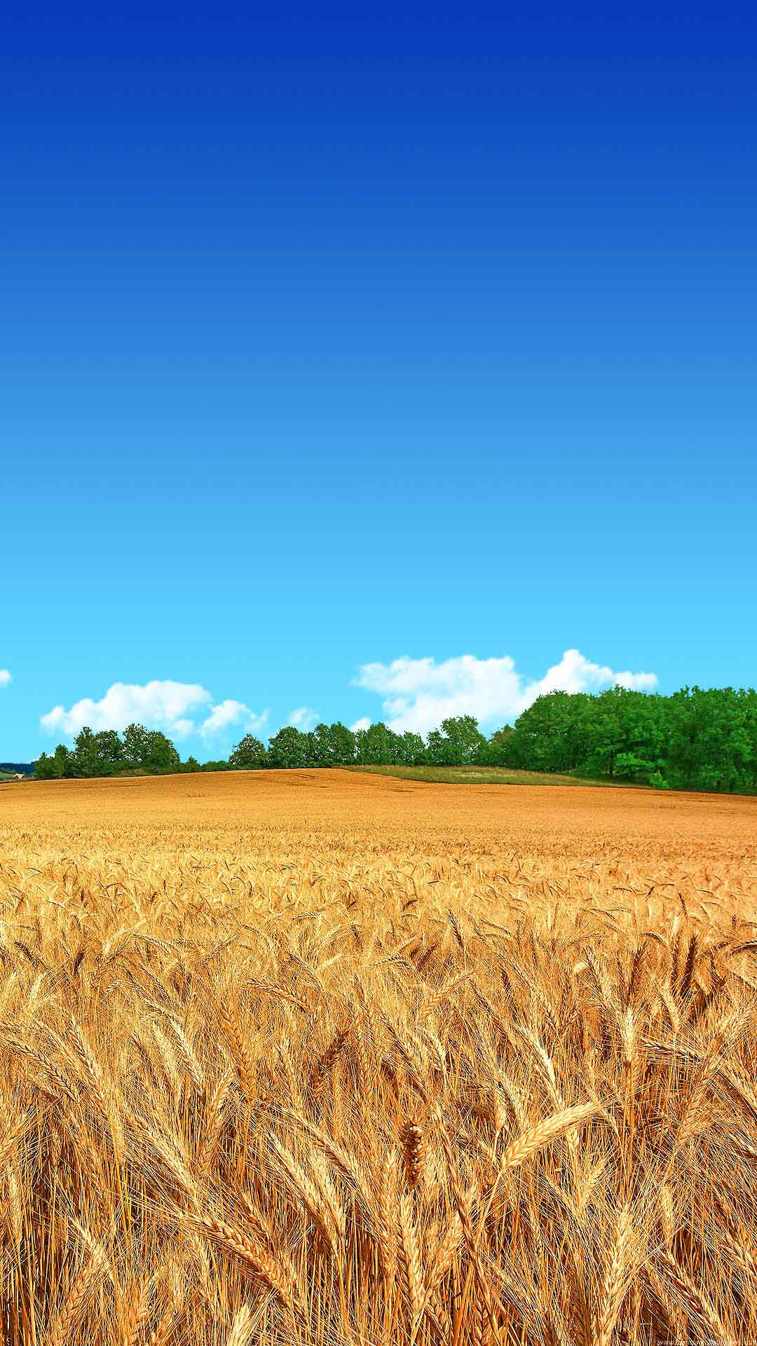 Samsung Galaxy J7 Wallpapers Farmer fields android 1080x1920