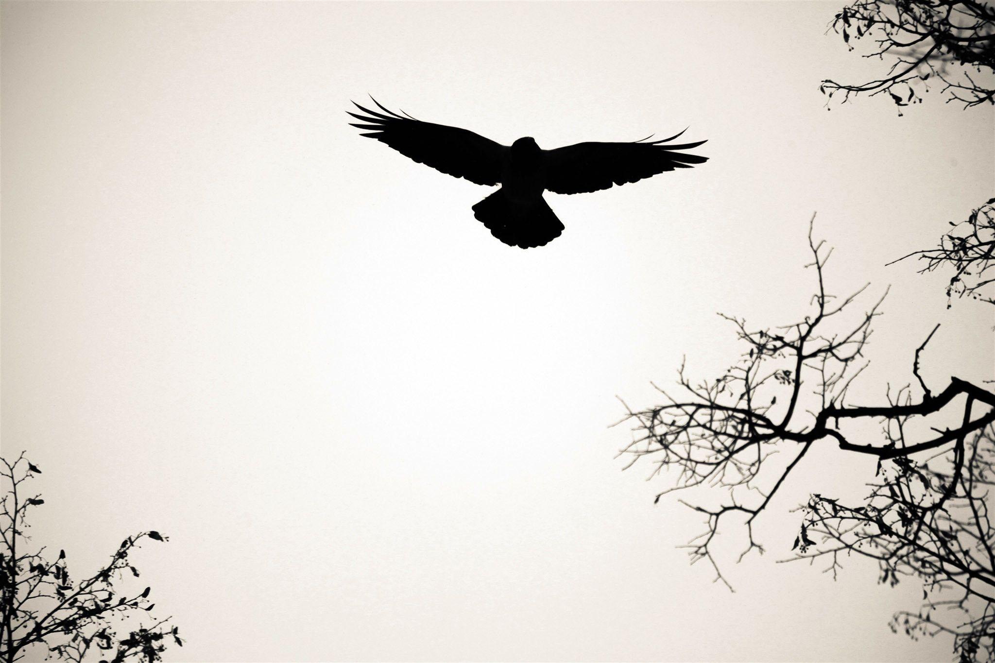 bird silhouette wallpaper wallpapersafari