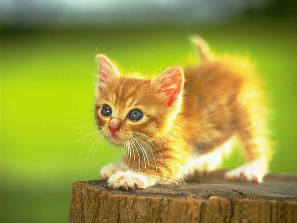 Adorable lil Kittens   Cute Kittens Photo 9781745 1024x768