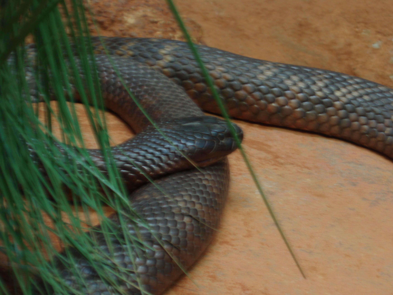venomous snake bite pics 2816x2112