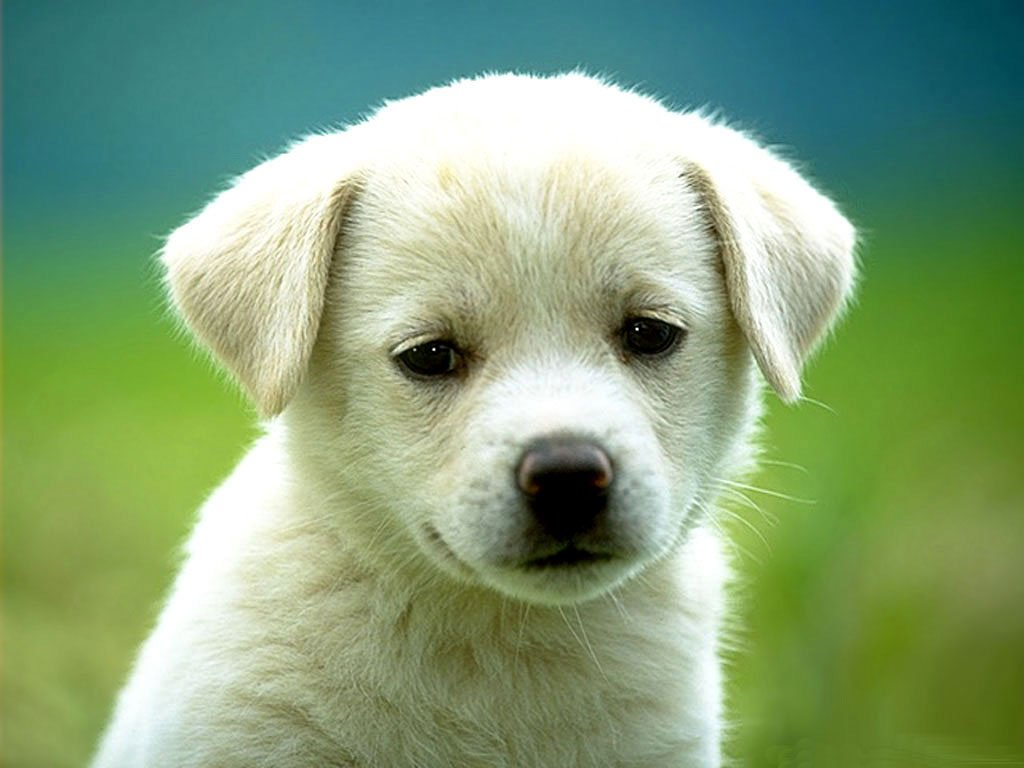 All Wallpapers Beautiful Dog Hd Wallpapers 1024x768