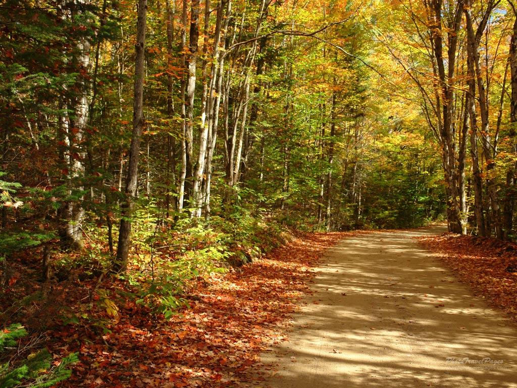autumn scene 1024x768