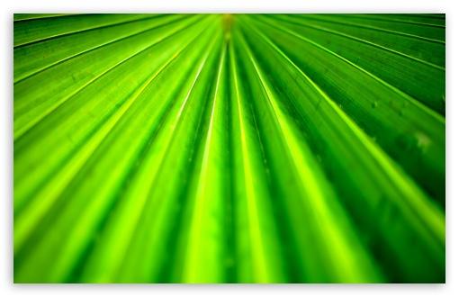 Download Tropical Leaf wallpaper 510x330