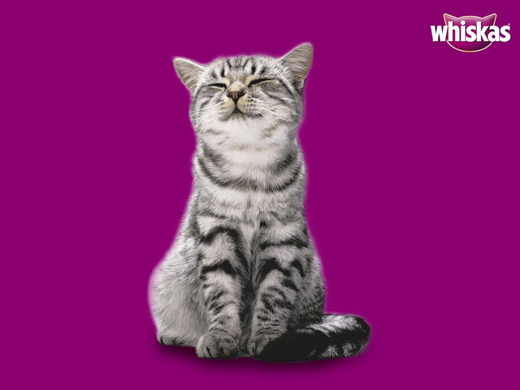 Download 66+  Gambar Kucing Whiskas Lucu HD
