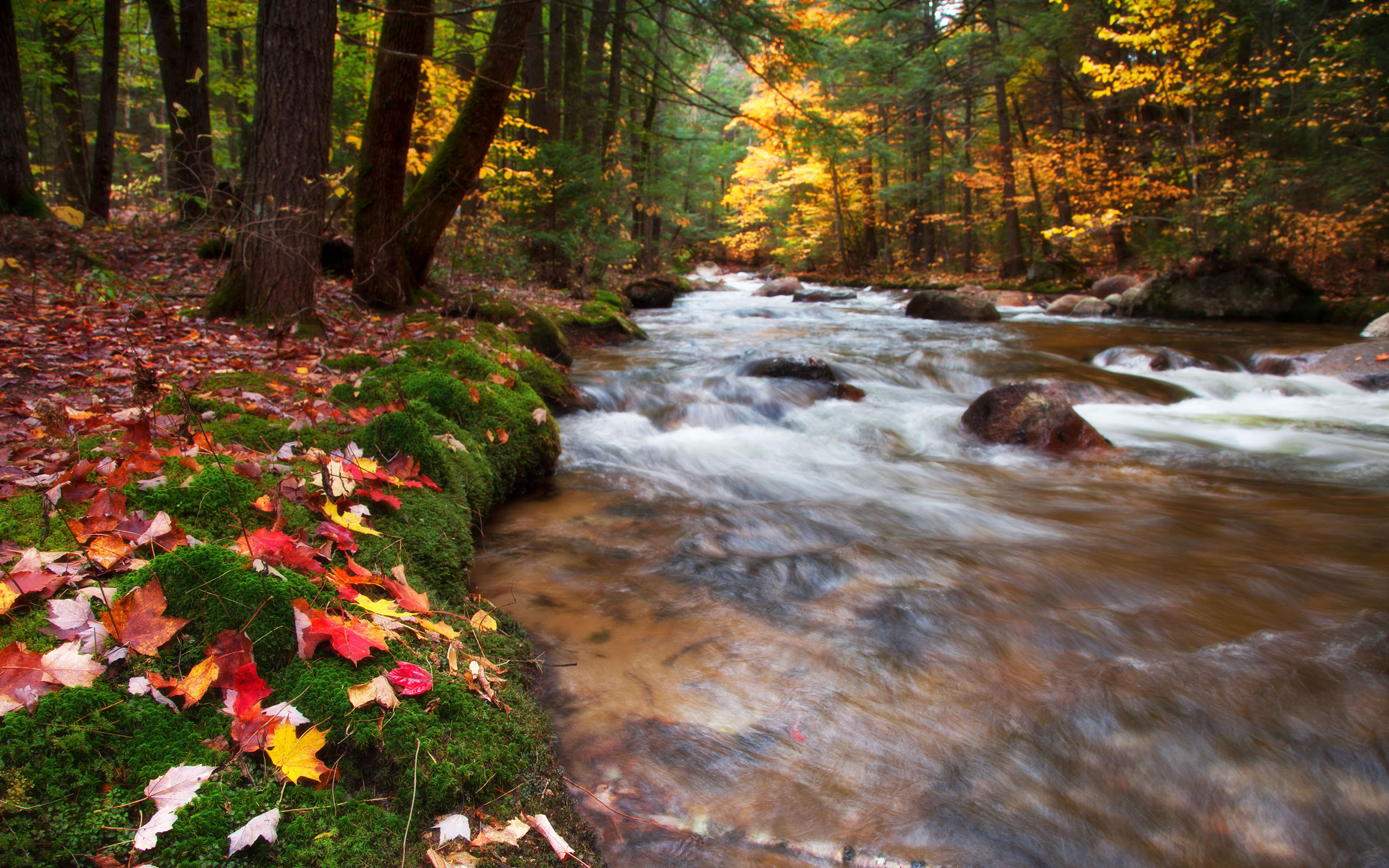 Babbling Brook United States New Hampshire White Mountains 2560x1600
