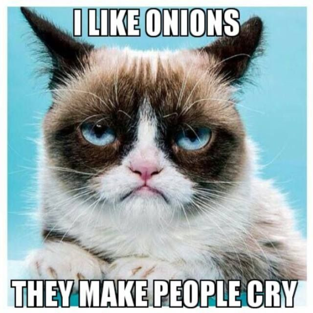 Top 40 Funny Grumpy cat Pictures and Quotes 640x640