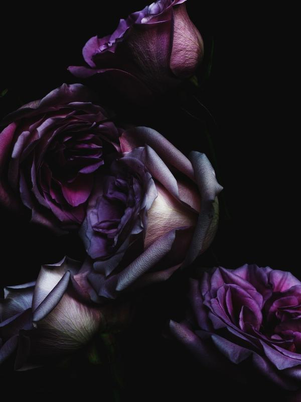 Free download flowersdark dark flowers roses 1280x1707 wallpaper flowers  [600x800] for your Desktop, Mobile & Tablet | Explore 74+ Dark Flower  Wallpaper | Free Flower Wallpaper, Widescreen Desktop Wallpaper Dark  Flower, Desktop
