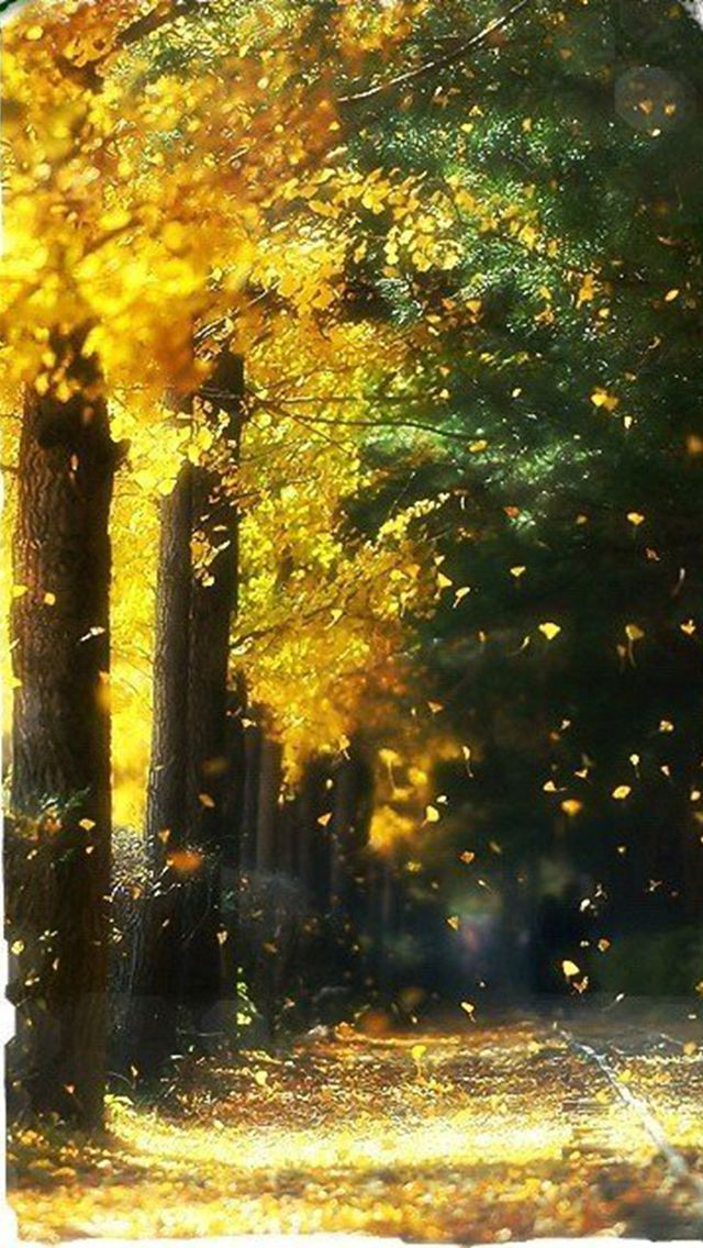 Falling Leaves In Autumn iPhone 6 6 Plus and iPhone 54 Wallpapers 640x1136