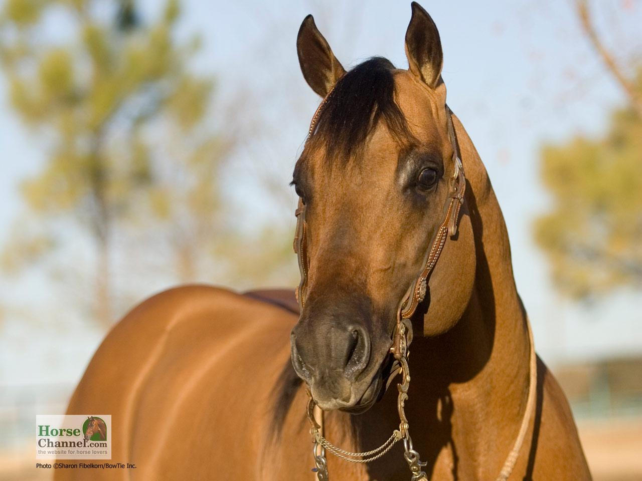 Ranch Horse Desktop Wallpapers 1280x960
