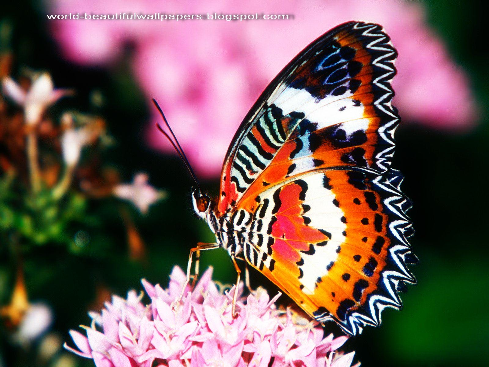 Beautiful Wallpapers Beautiful Butterflies Wallpaper 1600x1200