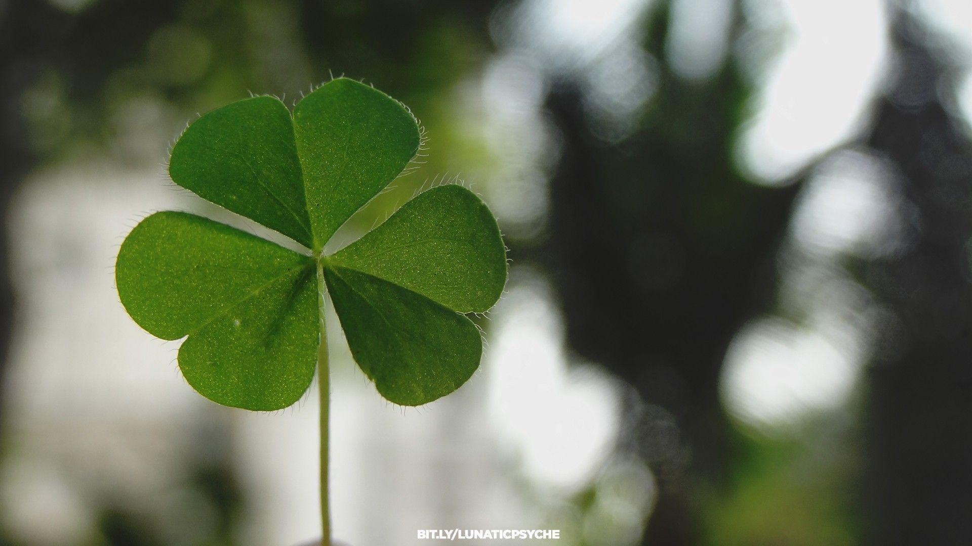 Four Leaf Clover Wallpapers 1920x1080