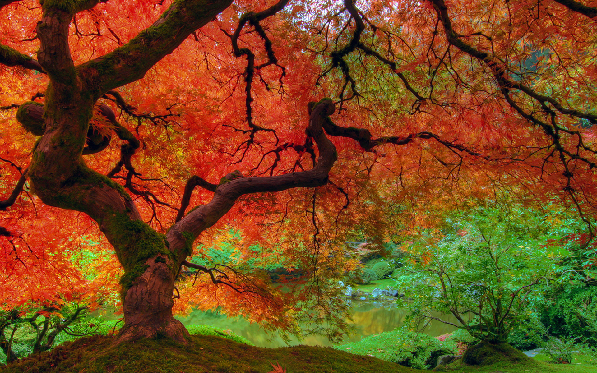 Fall Colors Wallpaper Images & Pictures - Becuo