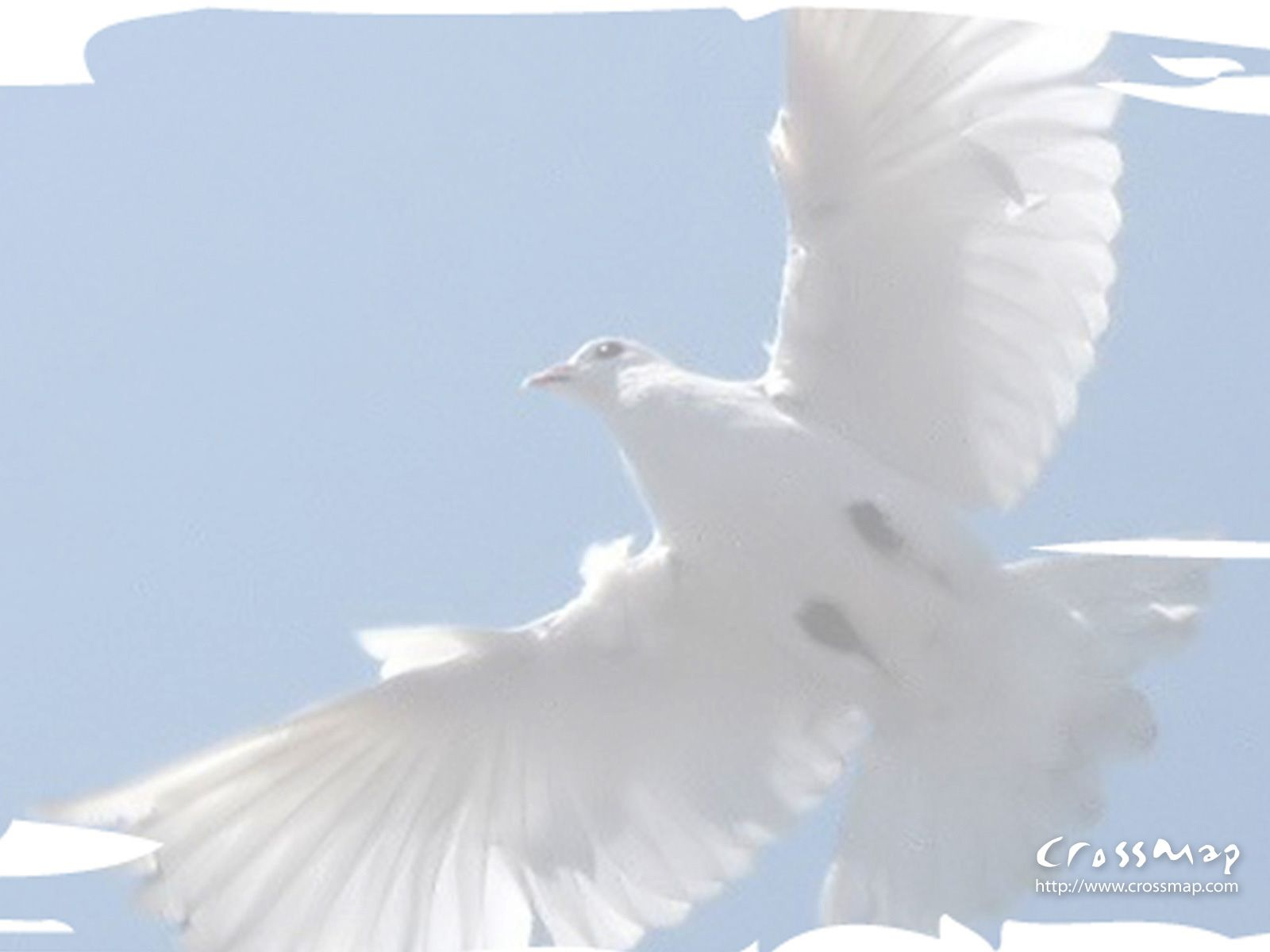 photos christian cross Spirit Dove 5 Crossmap Christian 1600x1200
