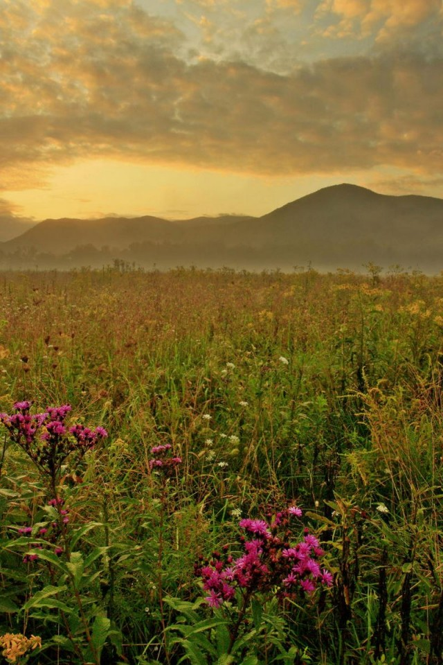 Morning Cades Cove Great Smoky Mountains   640x960   HD Wallpaper 640x960