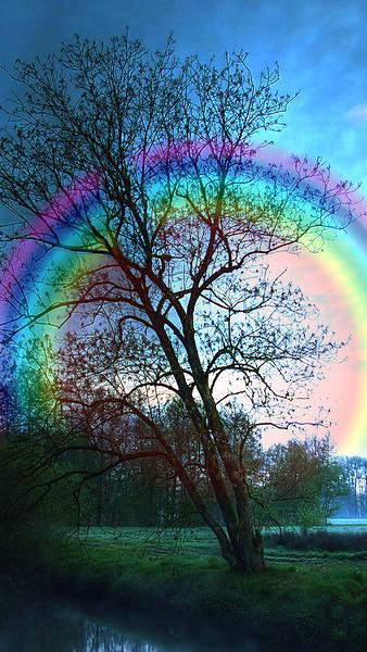 Rainbow Tree iPhone 6S Plus Wallpaper 338x600