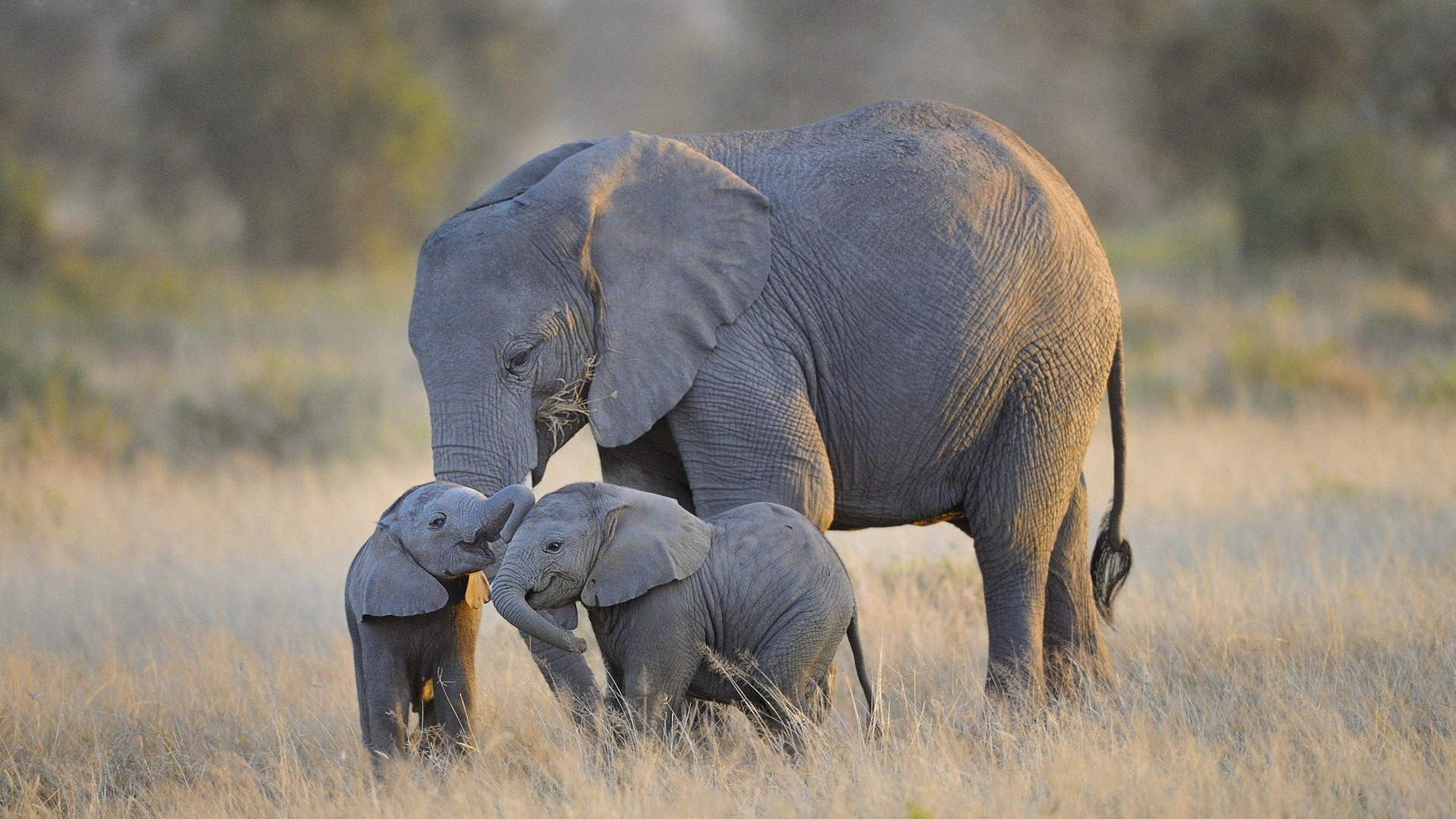 Baby elephant wallpapers Baby Animals 1920x1080