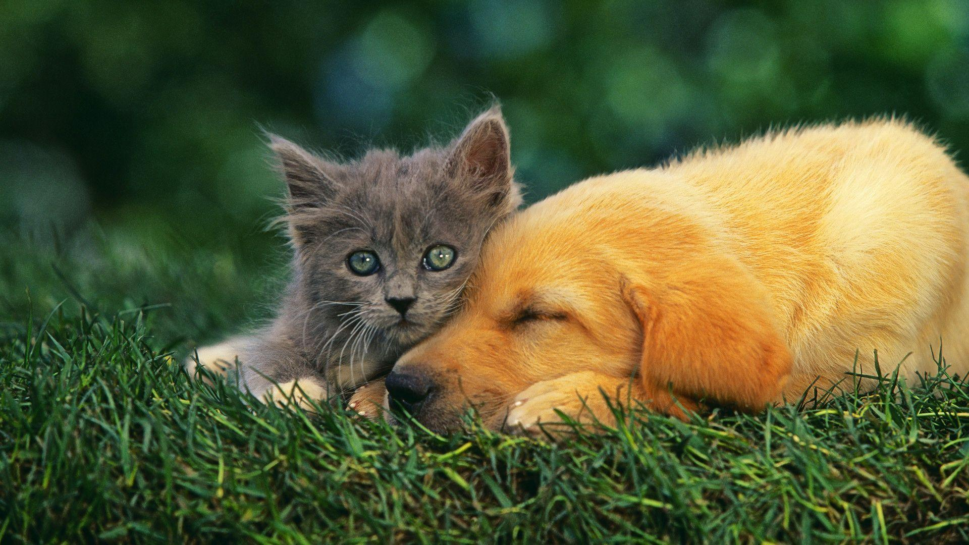 Dog And Cat Wallpapers 1920x1080