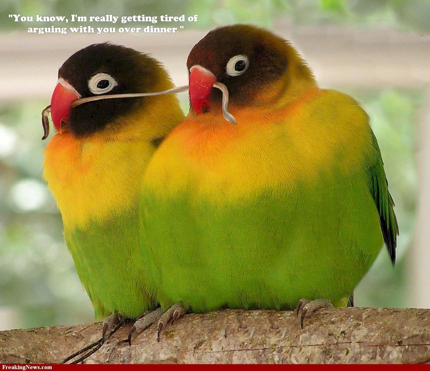 Image Result For Lovebird Wallpaper Wallpapersafari