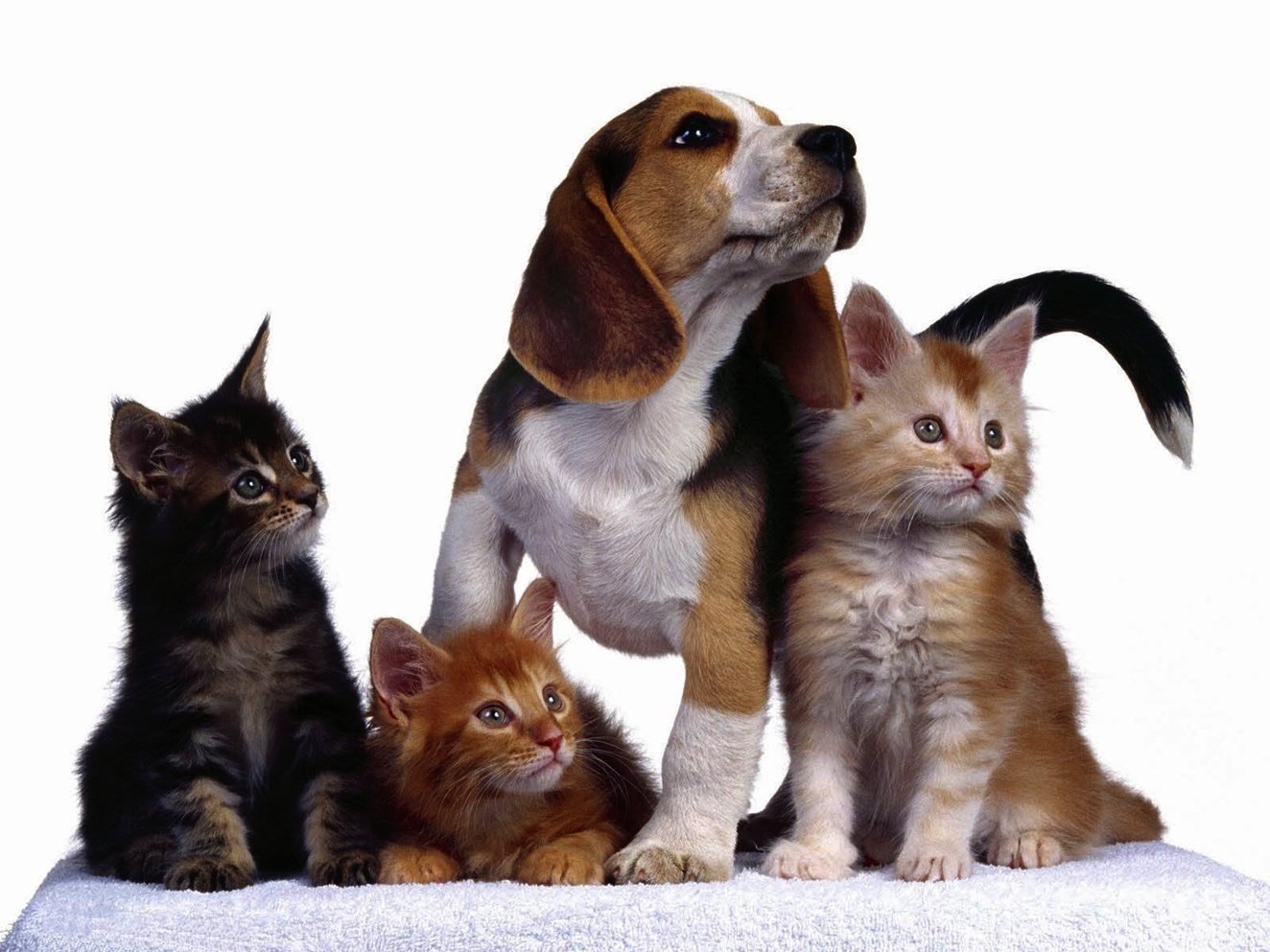 Cute Dog And Cat Wallpaper 1324x993