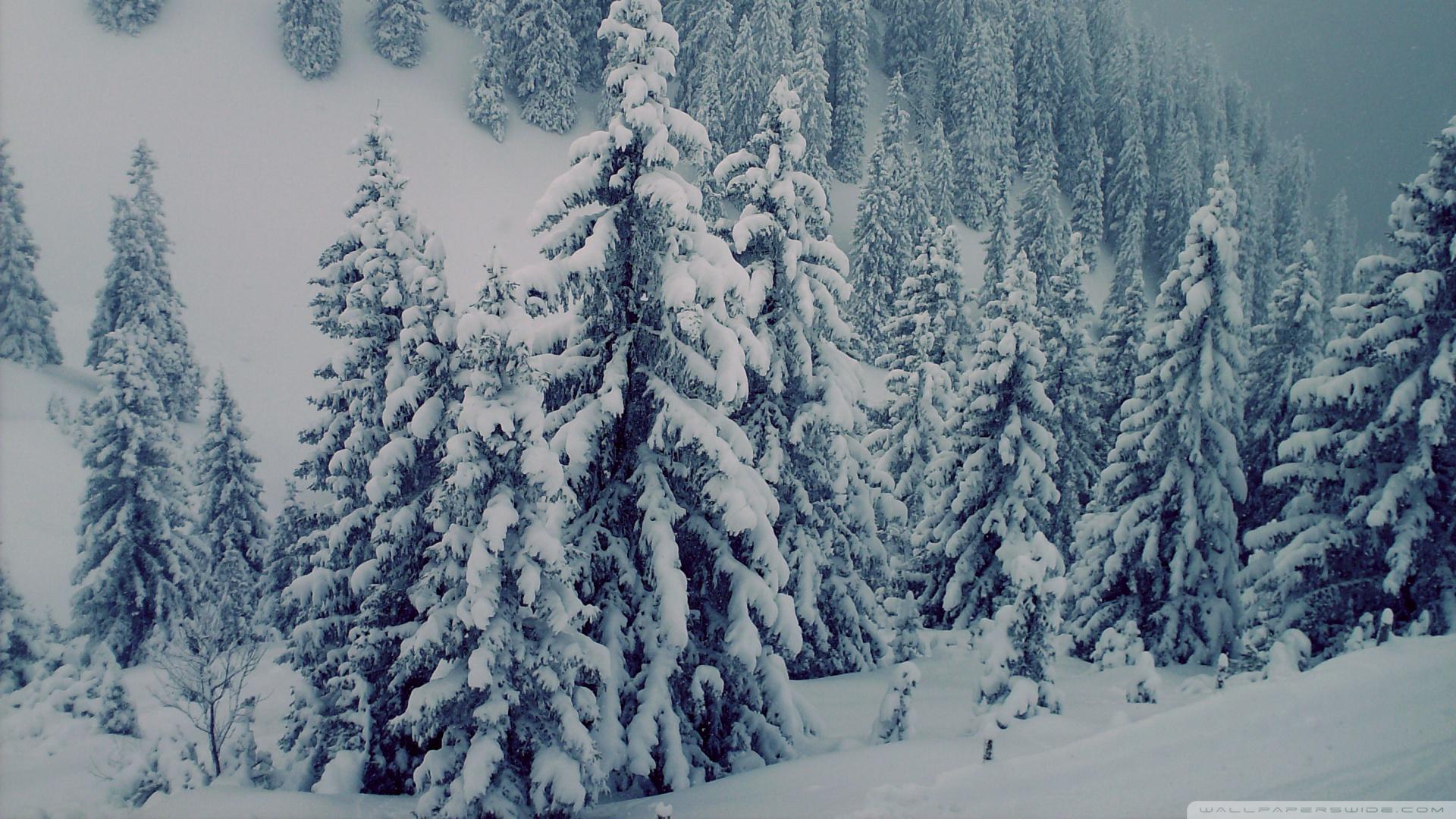 Snowy Fir Trees 3 Wallpaper 1920x1080 Snowy Fir Trees 3 1920x1080