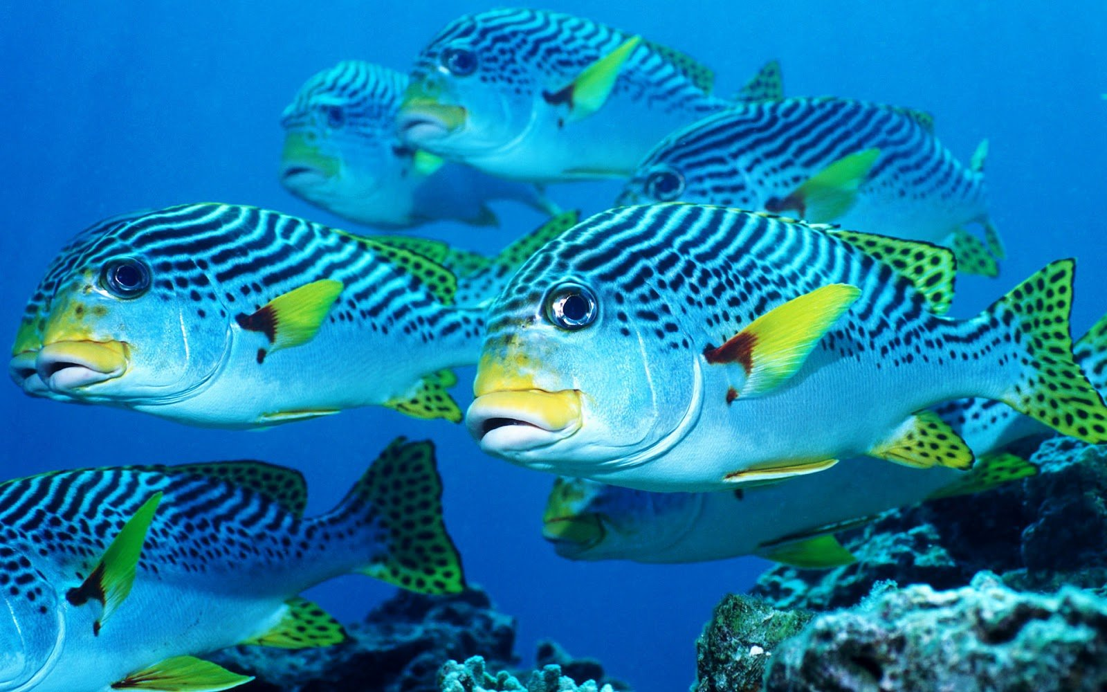 life wallpapers marine life on the seabed like fish plants animals hd 1600x1000