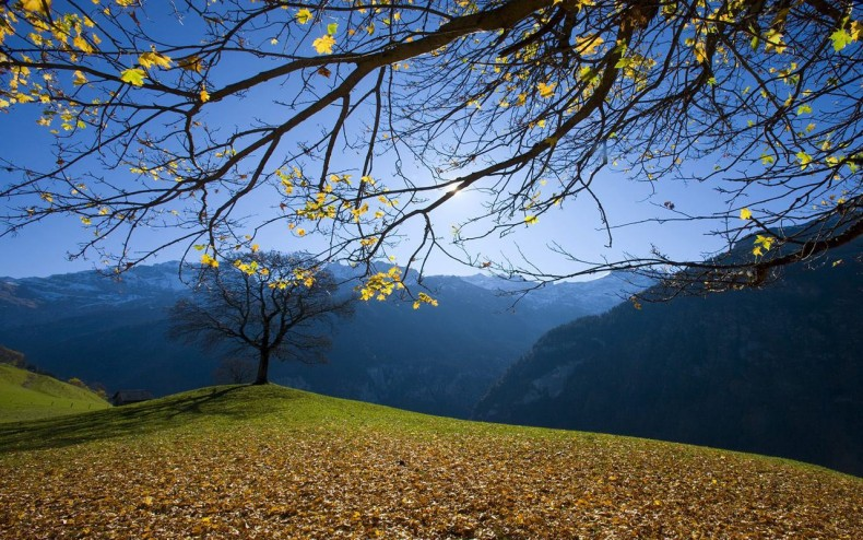 Set Background That You Download Beautiful by download best 790x494