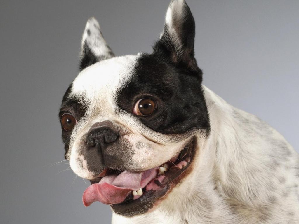 Funny Dog Face Hd Wallpaper Wallpaper List 1024x768
