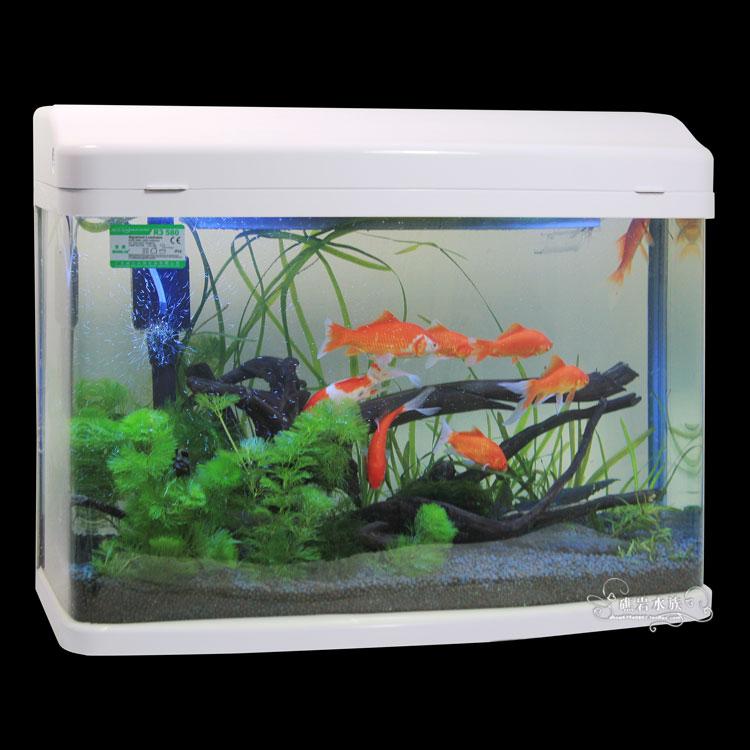 gallon fish tanks for sale cheap 55 gallon fish tank for sale cheap 750x750