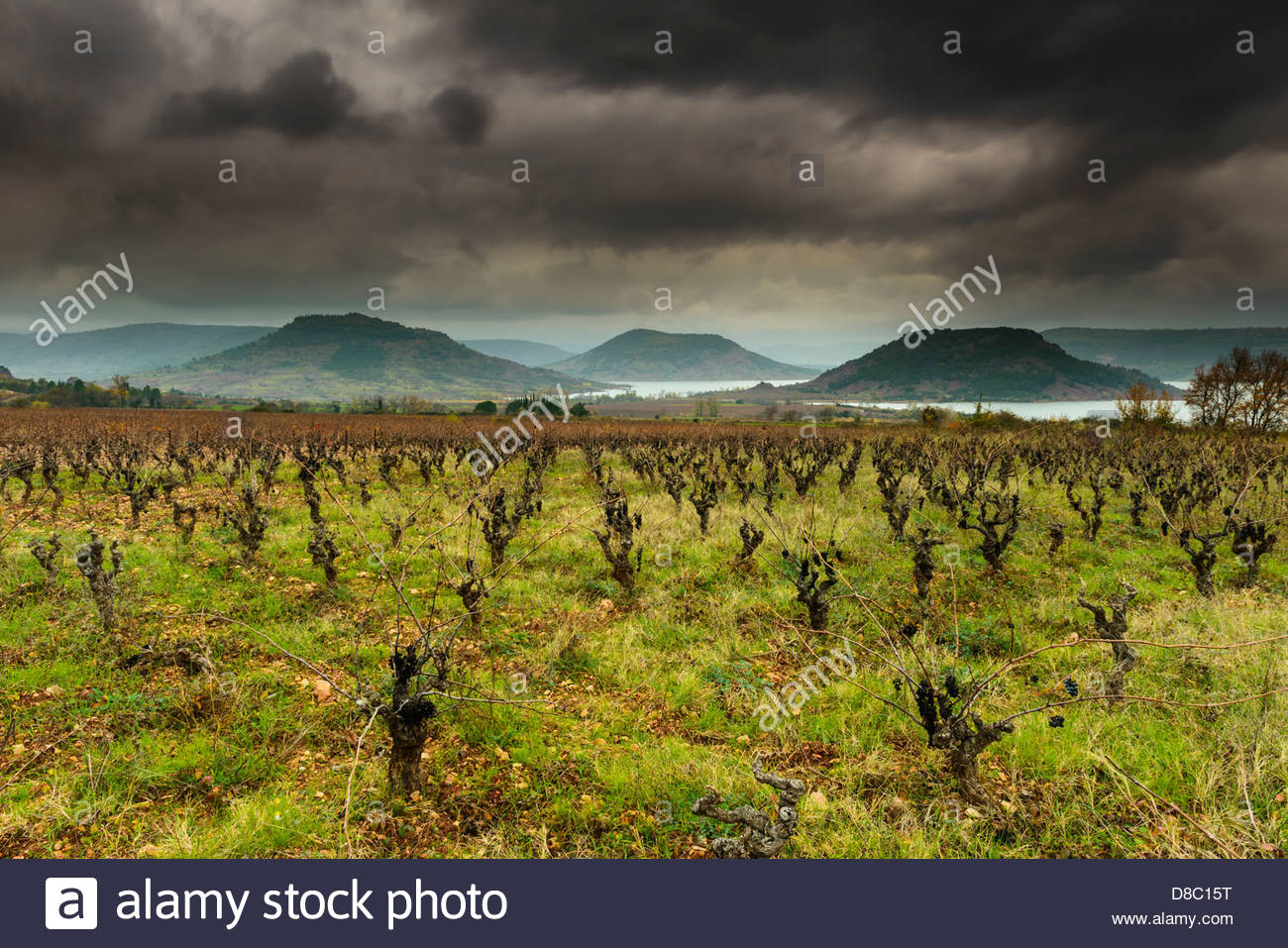 Bare vines in vineyard with Le Lac du Salagou in the background 1300x957