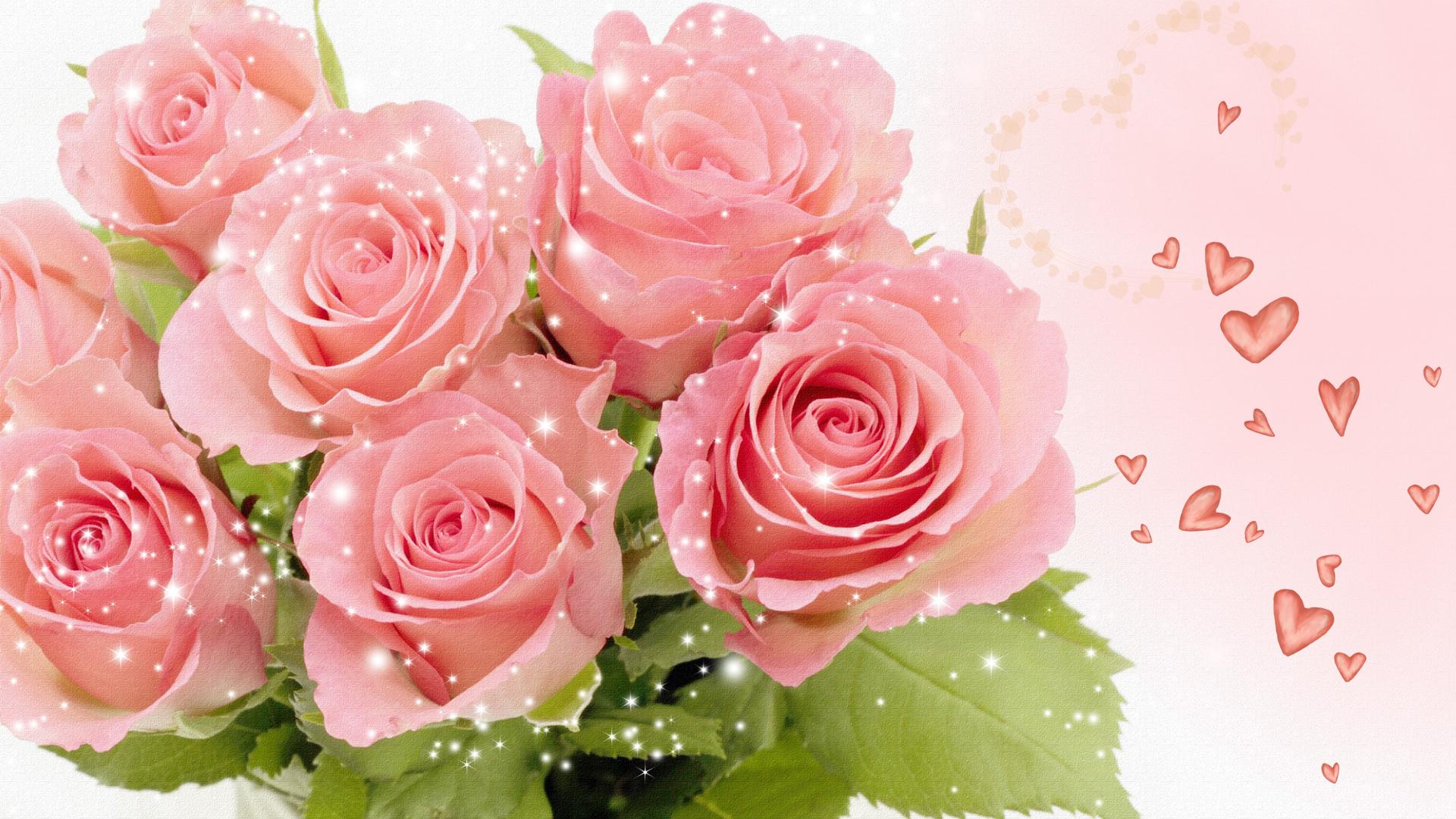 Pretty Pink Rose Wallpaper   Colors Wallpaper 34511804 1920x1080