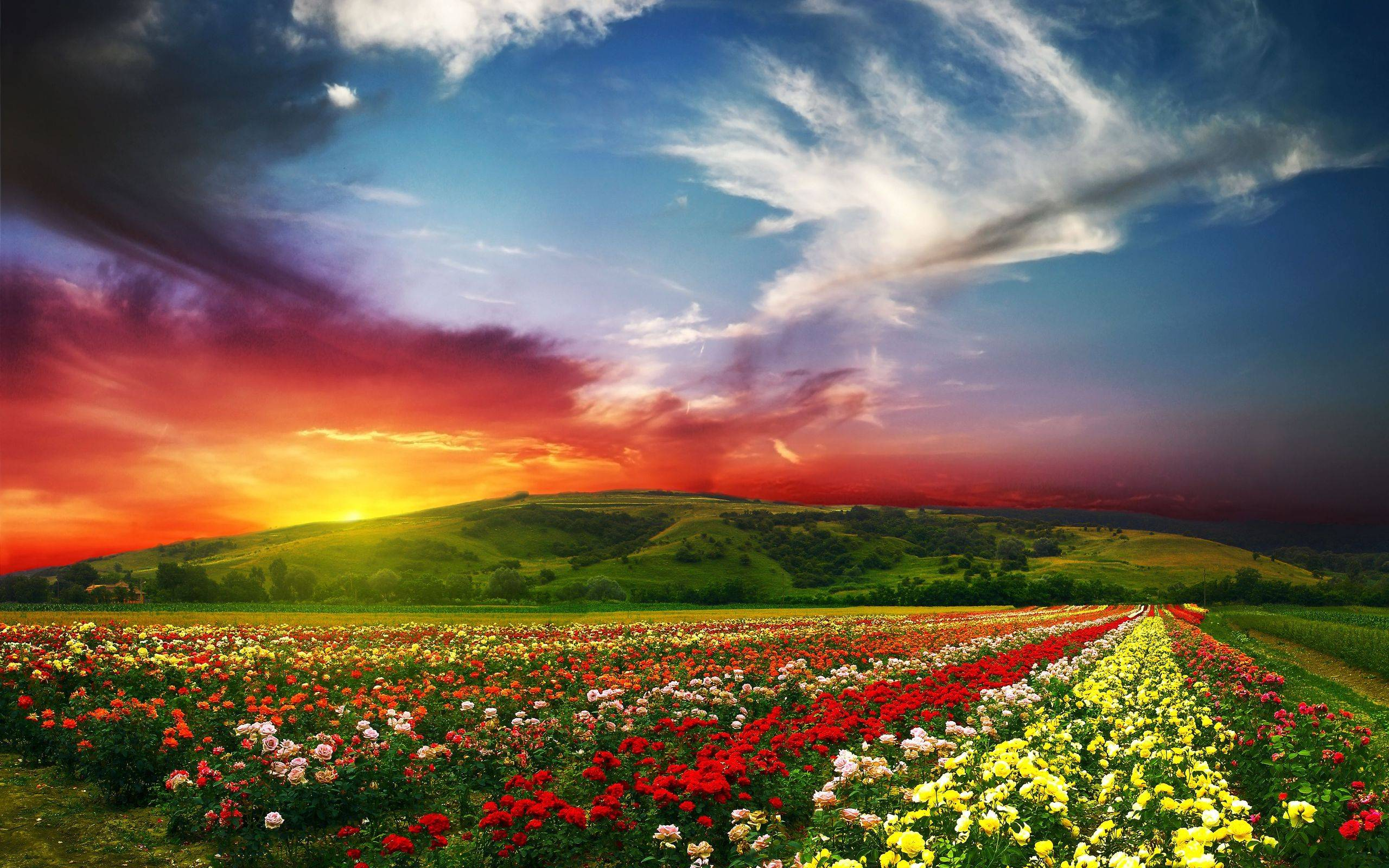 Spring Backgrounds   Wallpaper High Definition High Quality 2560x1600