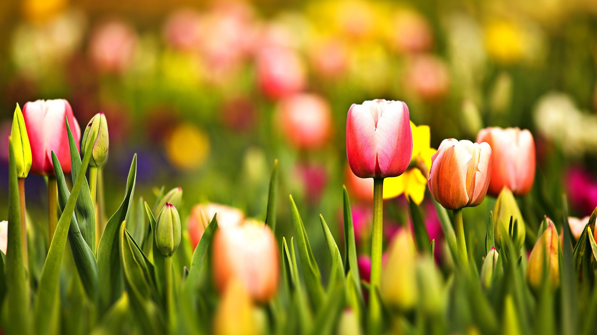 Spring Wallpapers HD download 1920x1080