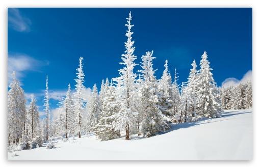 Beautiful Snowy Forest HD wallpaper for Standard 43 54 Fullscreen 510x330