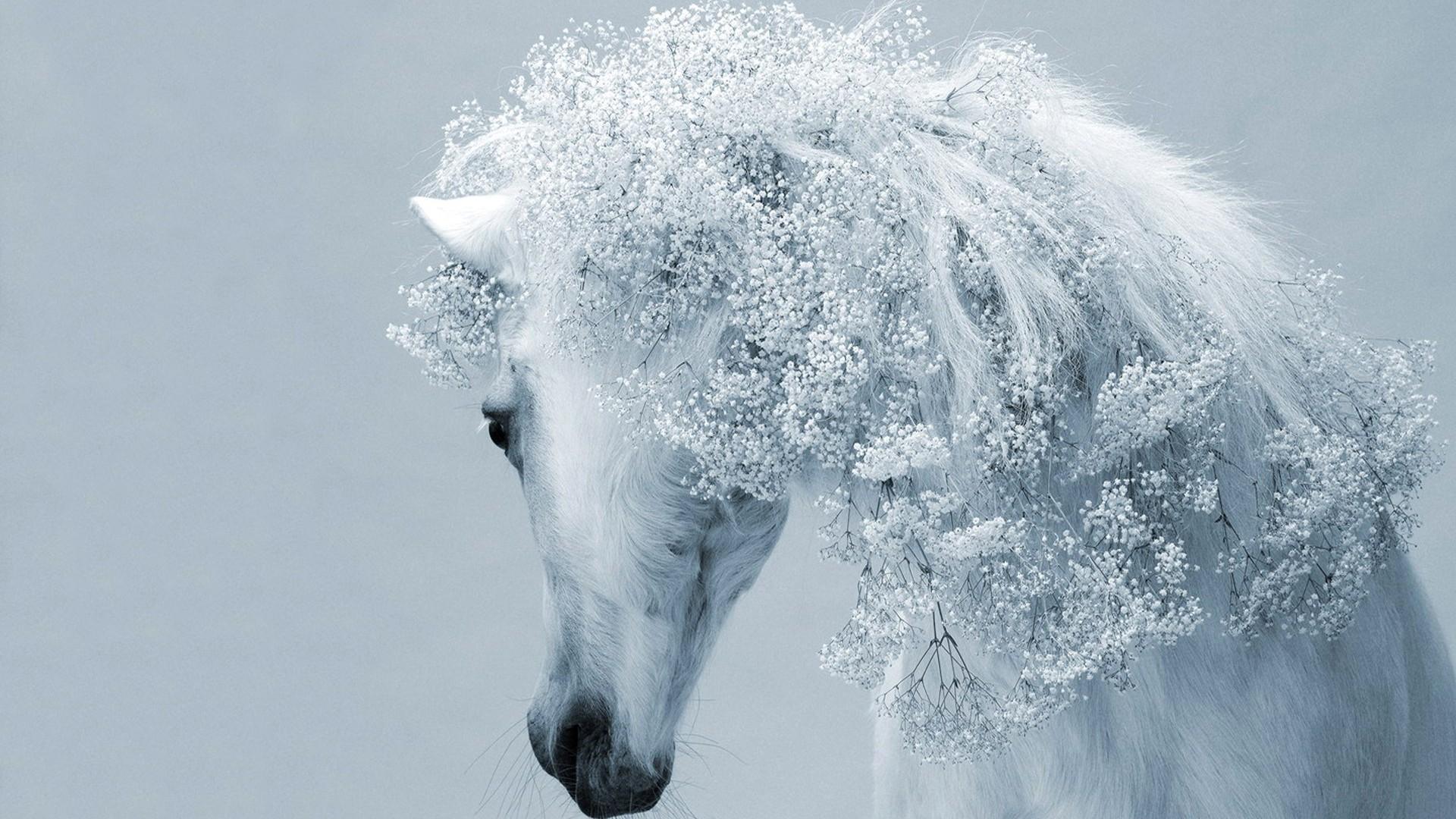 White Horse Wallpaper HD   Magic4Wallscom 1920x1080