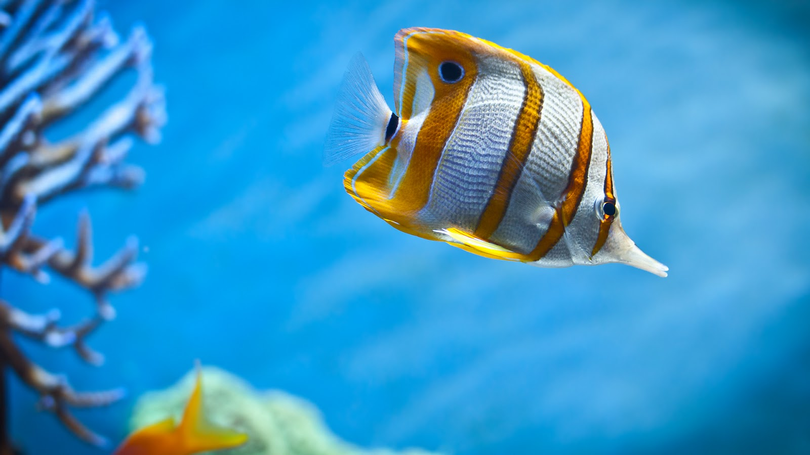 animated fish wallpapers digital colorful wallpapers animated 1600x900