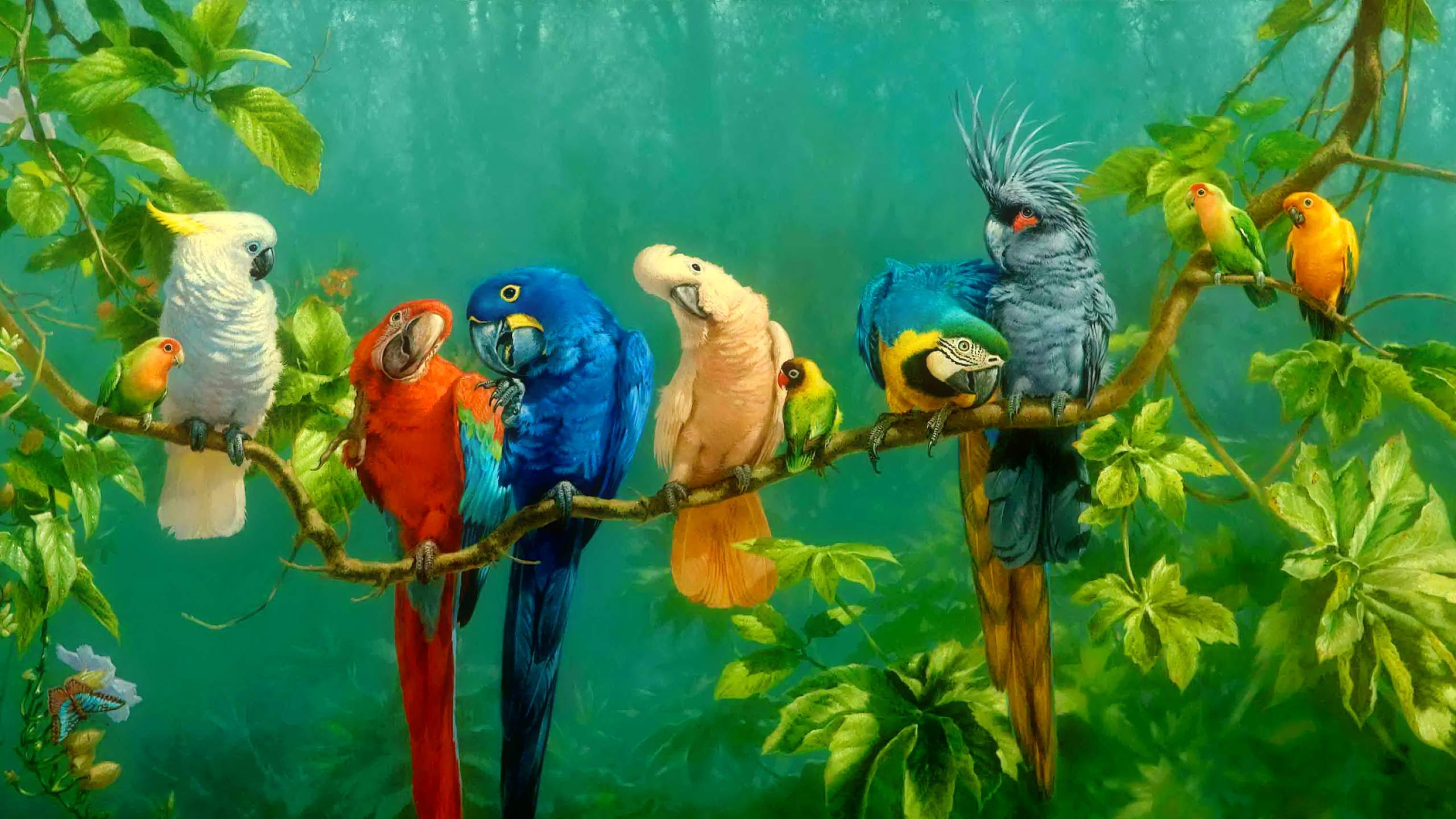 Parrot Wallpapers 26 WallpapersExpert Journal 2560x1440