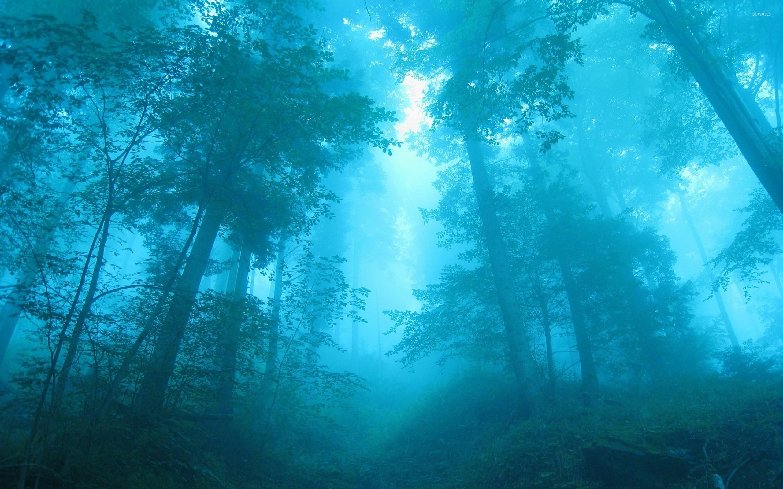 Blue light in the foggy forest wallpaper   Nature wallpapers   28689 1680x1050