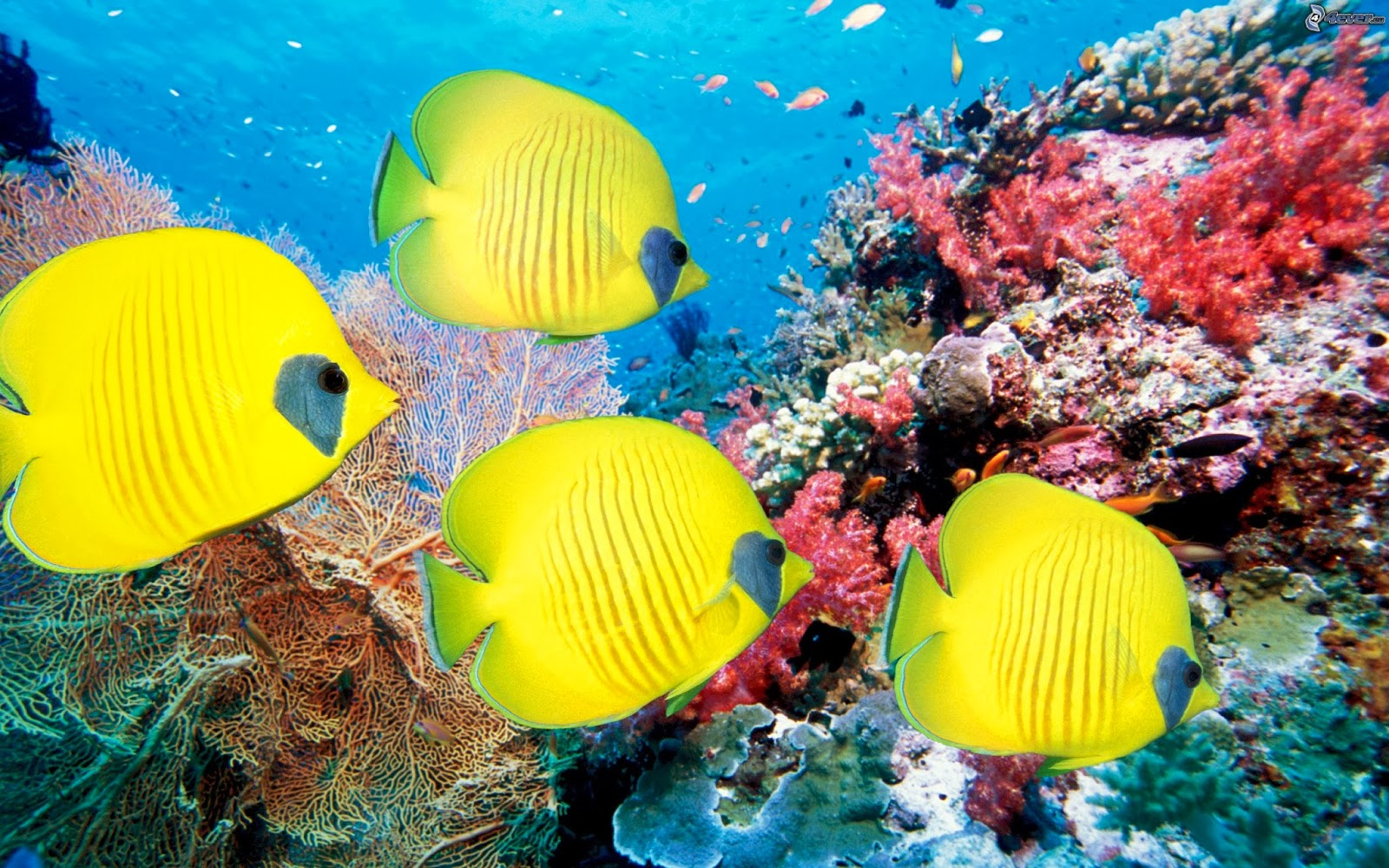 reef life fish wallpapers in high resolution for get coral reef 1600x1000