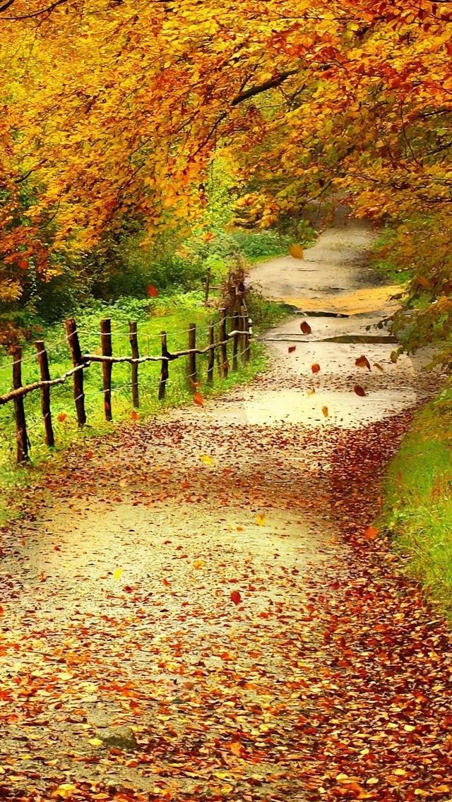 Beautiful Path Nature iPhone Wallpaper