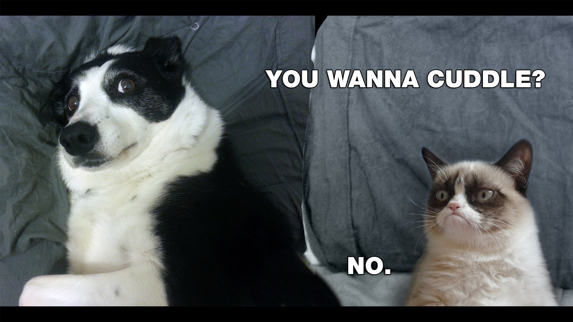 cuddle NO Grumpy Cat meme HD desktop wallpaper JikoBlog 1920x1080